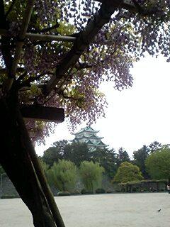 、藤棚越しに名古屋城を見る