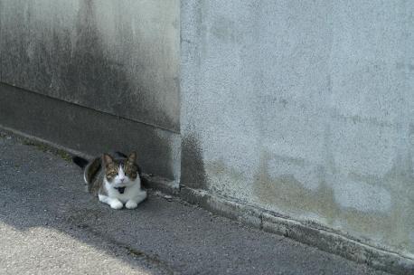 100mmMACRO+α-SweetD 猫ちゃん
