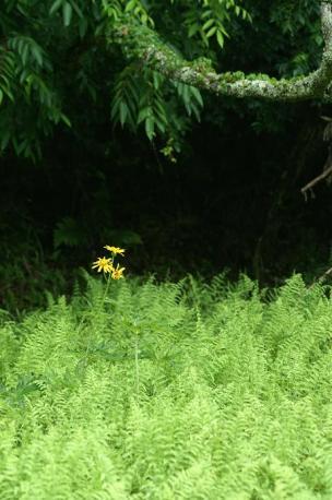 100mmMACRO+α-SweetD 黄色のお花♪