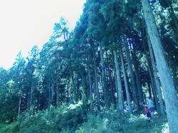 昆虫王国の森