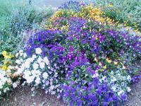 散歩してみつけた花