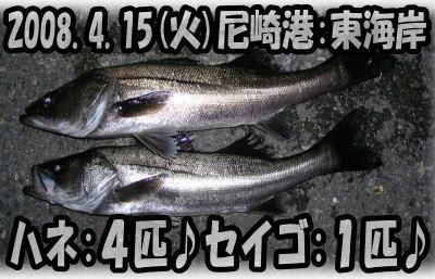 今日の釣果♪v(^▽^)