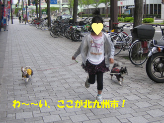 04219.jpg