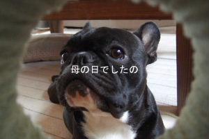 2008_0510(006).jpg