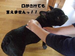 2008_0614(005).jpg