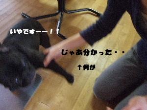 2008_0614(011).jpg