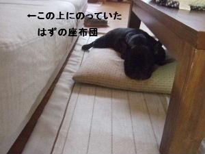 2008_0619(005).jpg