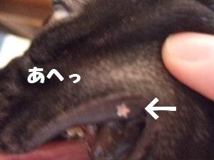 2008_0720(001).jpg