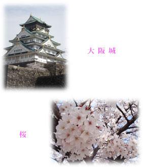 大阪城&桜