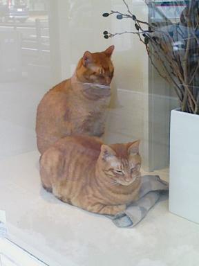 お花屋さんの猫
