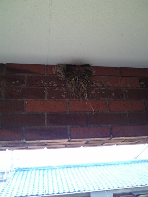 ツバメの巣 未完成