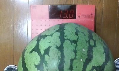 13kg0730.jpg