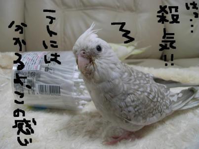 殺気???