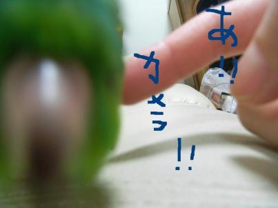 eruhoku3_convert_20080426212742.jpg
