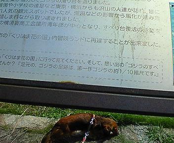 kannonzaki3.jpg
