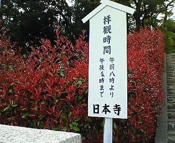 niho6.jpg