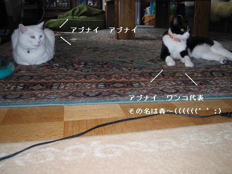 IMG_0118_3.jpg