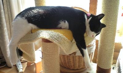 のびる猫2