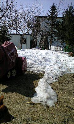 雪解けの庭