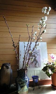 桜とサクランボの枝