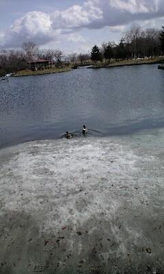 雪の残る池