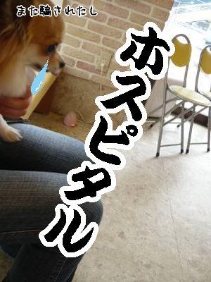 2008-05-12-07.jpg