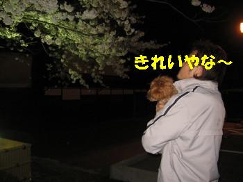 桜&犬&おやじ