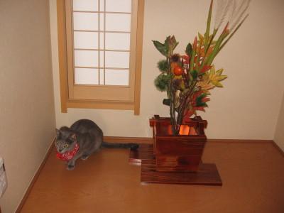 お座敷ネコ ルビちゃんです