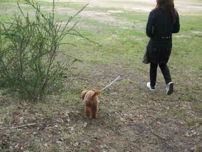 グラウンドお散歩1