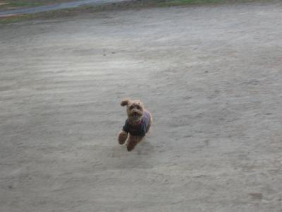 走る~走る~