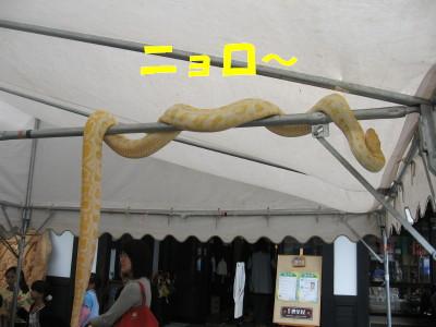 ナントカヘビ