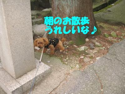 朝のお散歩大好き☆