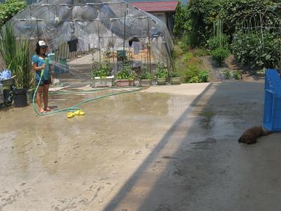ヒナと水遊び