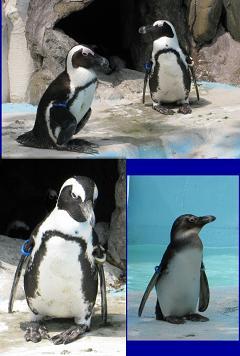 無題-ステッチされた画像-19ペンギン
