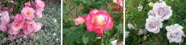 花を愛でるって、ステキだわぁ♪