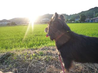 夕日とすこんぶ