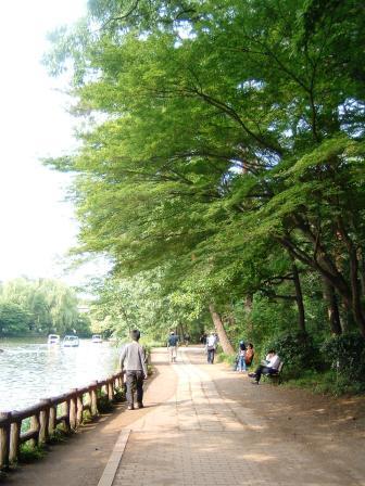 公園内散歩道