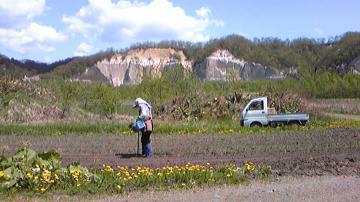 タマネギ畑とガンケ