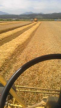 コンバイン収穫基線