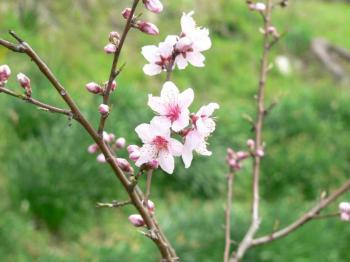 2006-04-12-04