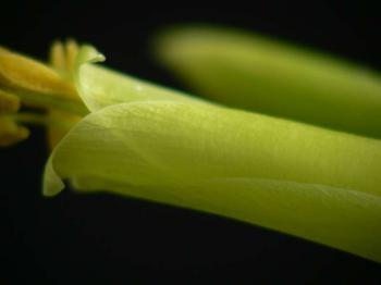 2006-04-21-03