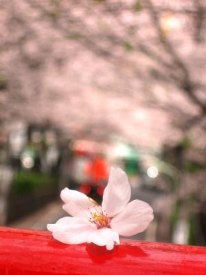 2008.04.08桜坂(2008.04)