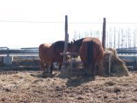 080330馬のおしり