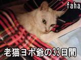 DSCF382211yy.jpg