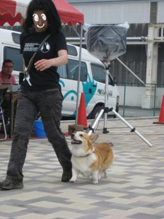 訓練犬として~