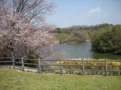 松尾寺 池