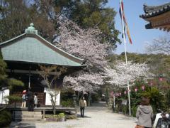 松尾寺 境内