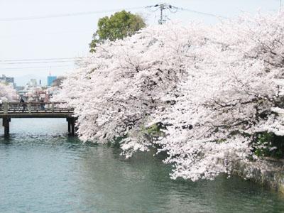 IMG_sakura2.jpg