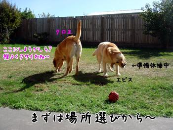 Doga1