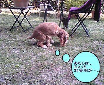 20080429-2.jpg